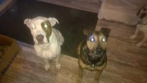 Kristys bfs dogs