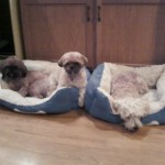 Toby buddy and lucky