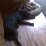 Ryder after a hard days play